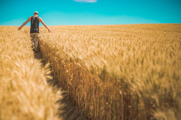 De belangrijke agrarische sector